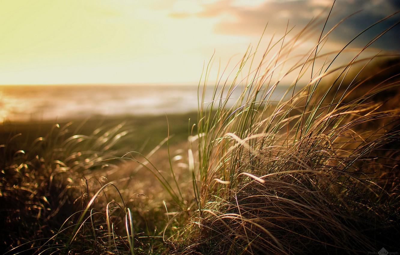 Photo wallpaper Grass, Beach, nature