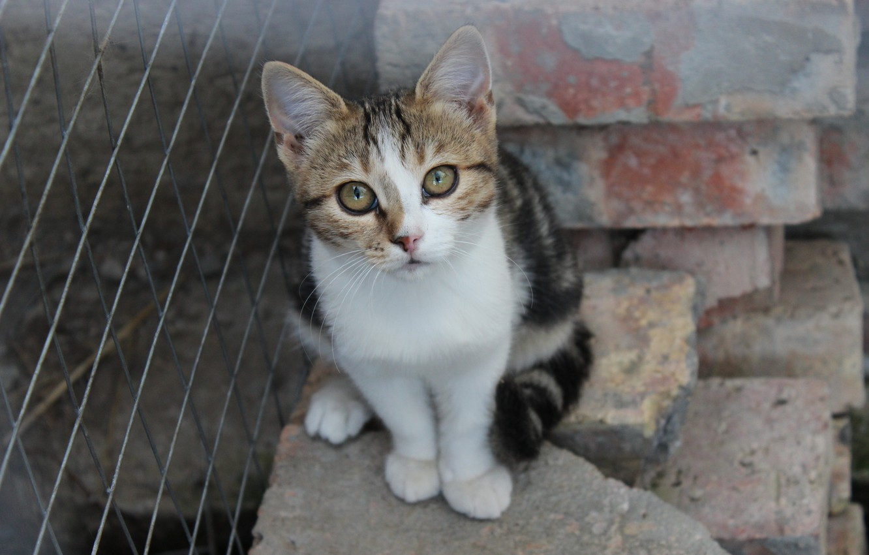 Photo wallpaper cat, animals, kitty