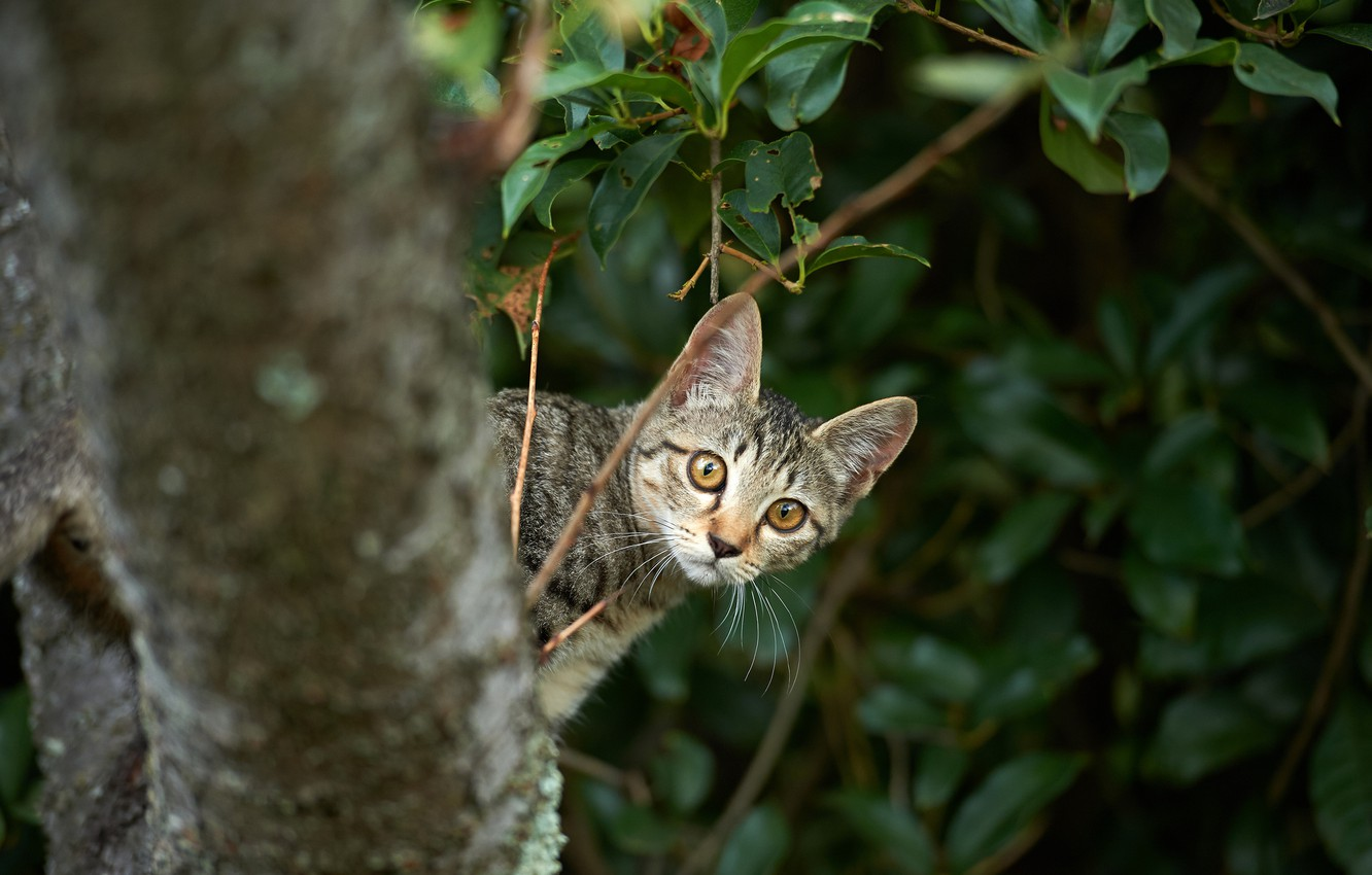 Photo wallpaper cat, branches, kitty, tree, Peeps