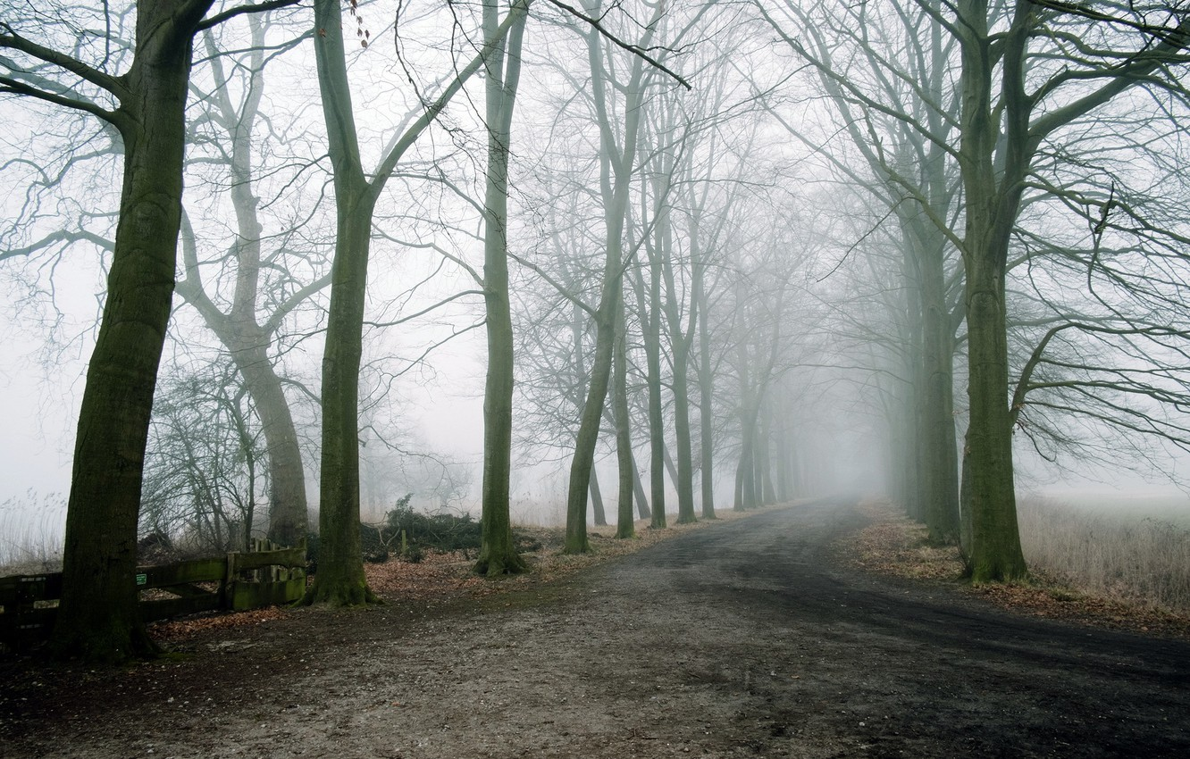 Photo wallpaper road, trees, landscape, fog