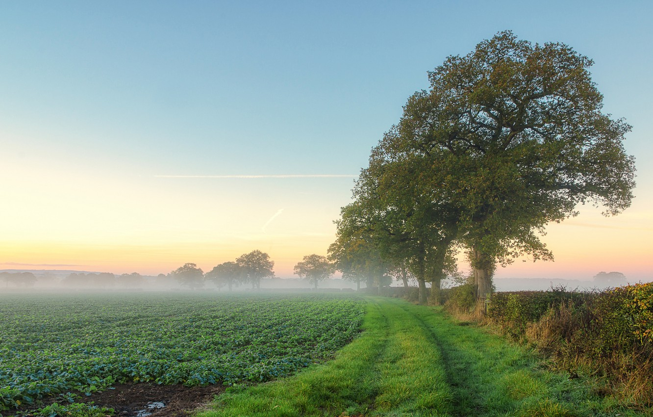 Photo wallpaper field, summer, trees, fog, morning