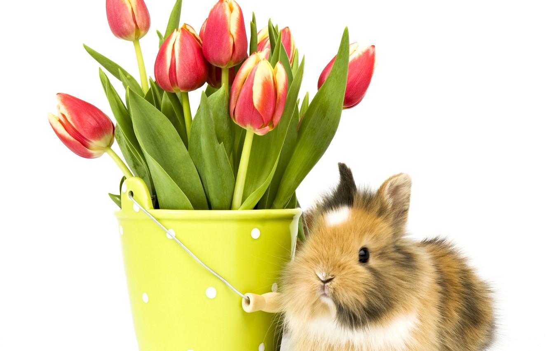 Photo wallpaper flowers, background, bucket, Bunny