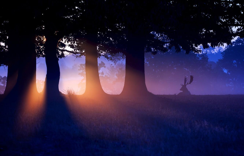Photo wallpaper forest, sunset, nature, deer