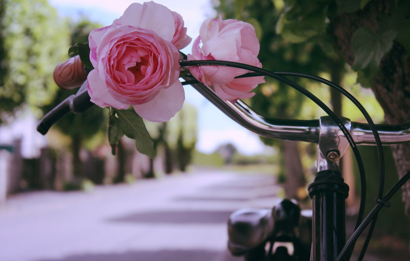 Photo wallpaper flower, bike, rose
