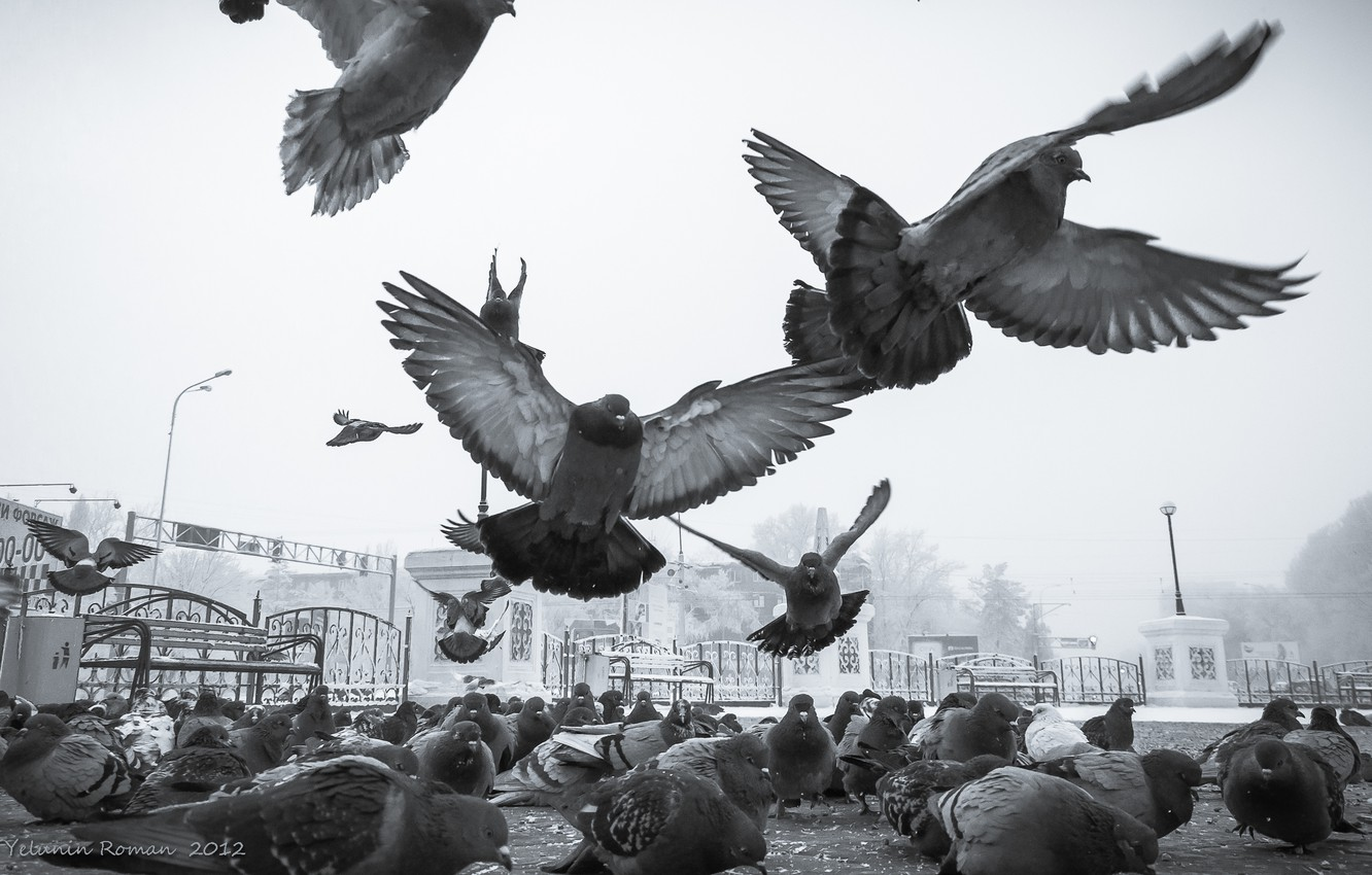 Photo wallpaper winter, the sky, snow, birds, the city, mood, street, wings, paws, feathers, beak, frost, day, …