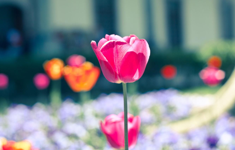 cvety cvetochek rozovyy polyana
