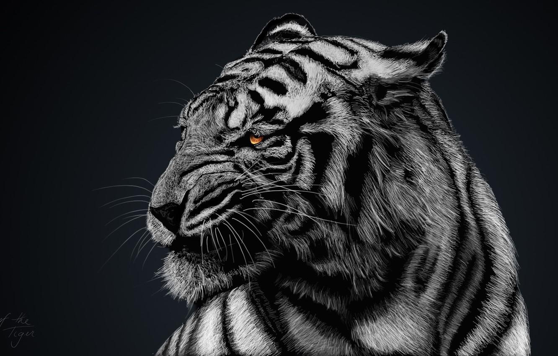 Wallpaper Black And White Black Background White Tiger