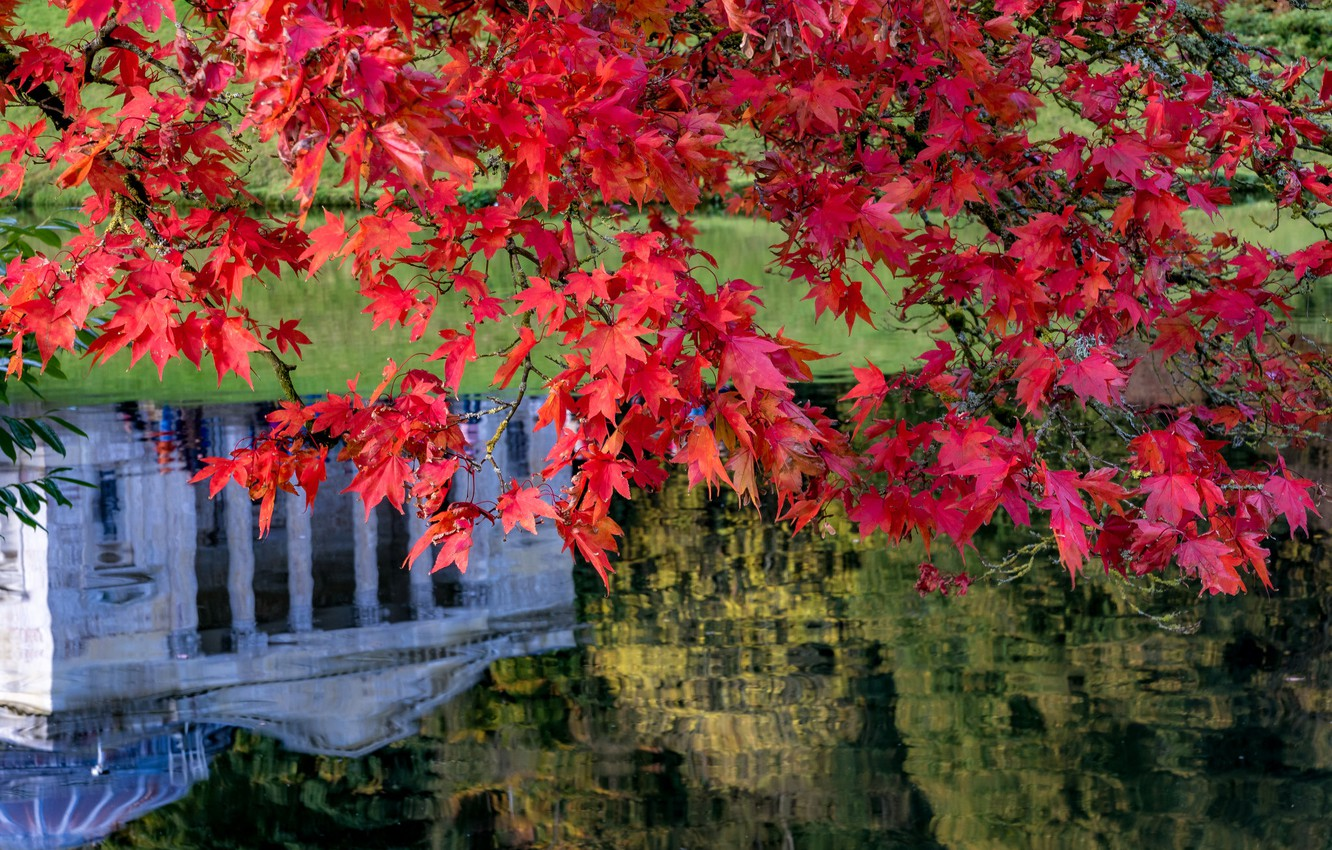 Photo wallpaper autumn, leaves, branches, lake, reflection, England, maple, Stored, England, Wiltshire, Stourhead Garden, Wiltshire, the landscape …