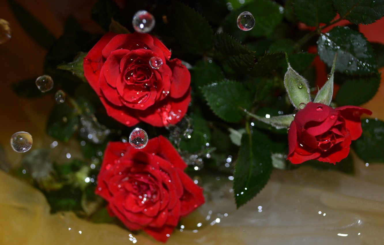 wallpaper water drops flowers roses images for desktop section