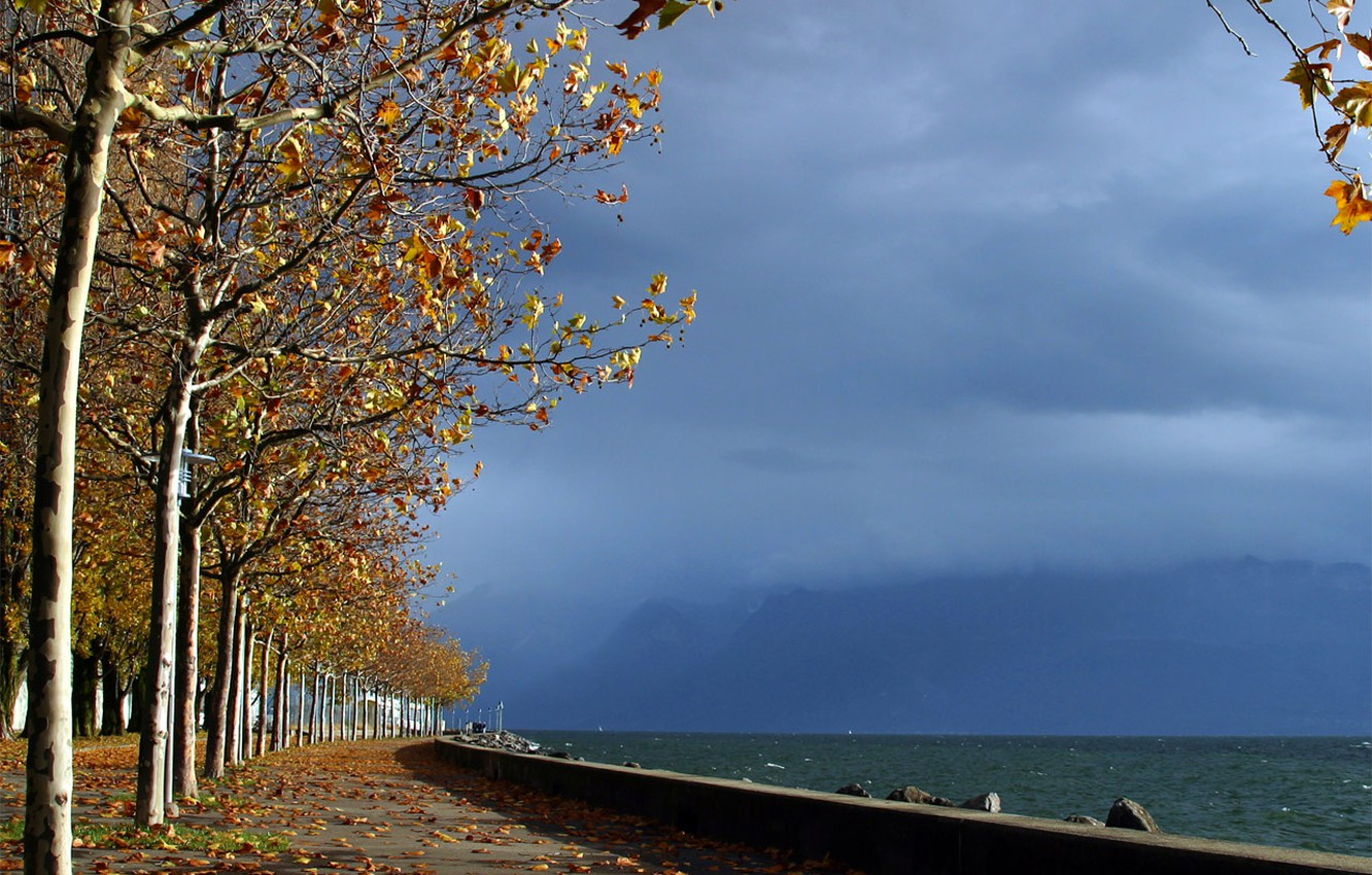 Photo wallpaper sea, autumn, the sky, leaves, water, trees, Park, horizon, alley