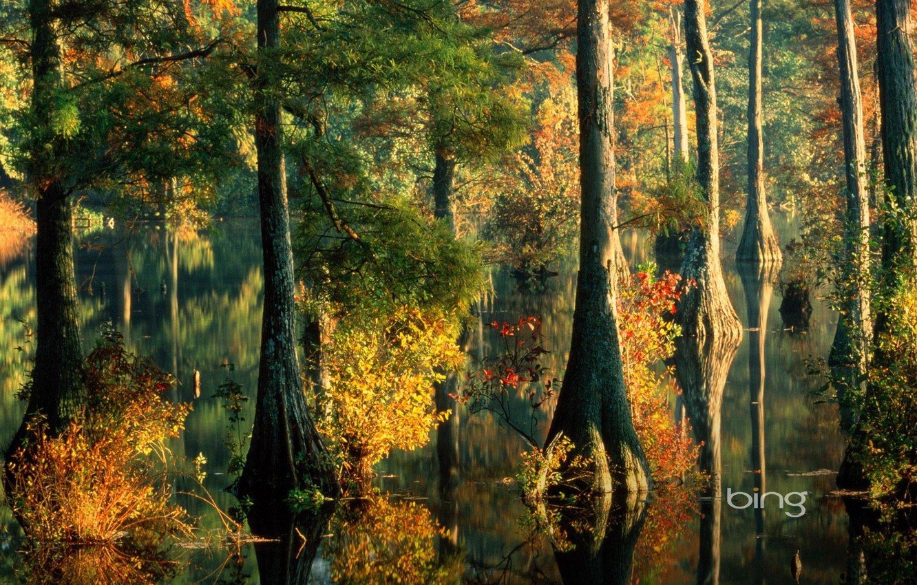 Photo wallpaper autumn, forest, leaves, water, trees, spill