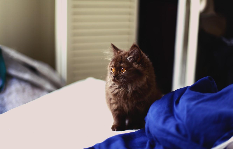 Photo wallpaper kitty, wool, fluffy, looks