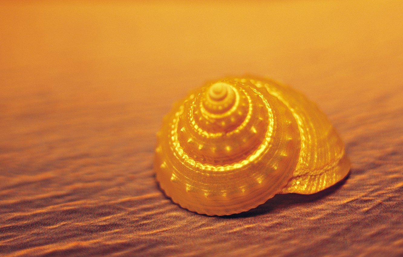 Photo wallpaper sand, shell, yellow