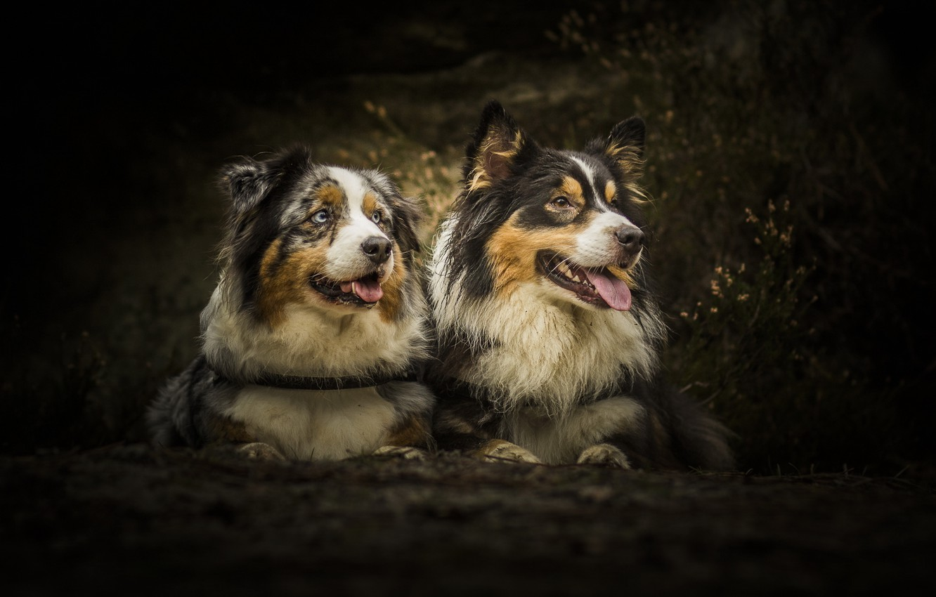 Photo wallpaper forest, dogs, pair, Wallpaper from lolita777, boys