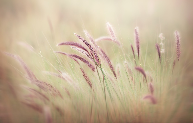 Photo wallpaper field, bush, stalks