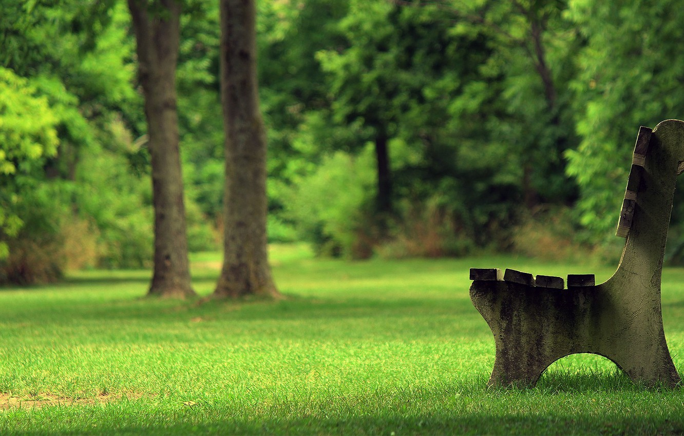 Photo wallpaper summer, grass, bench, Park, tree, shop