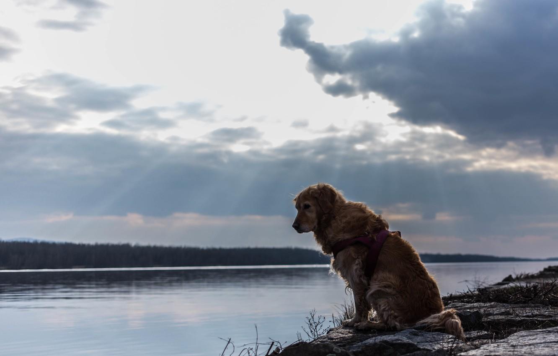 Photo wallpaper river, each, dog, dog