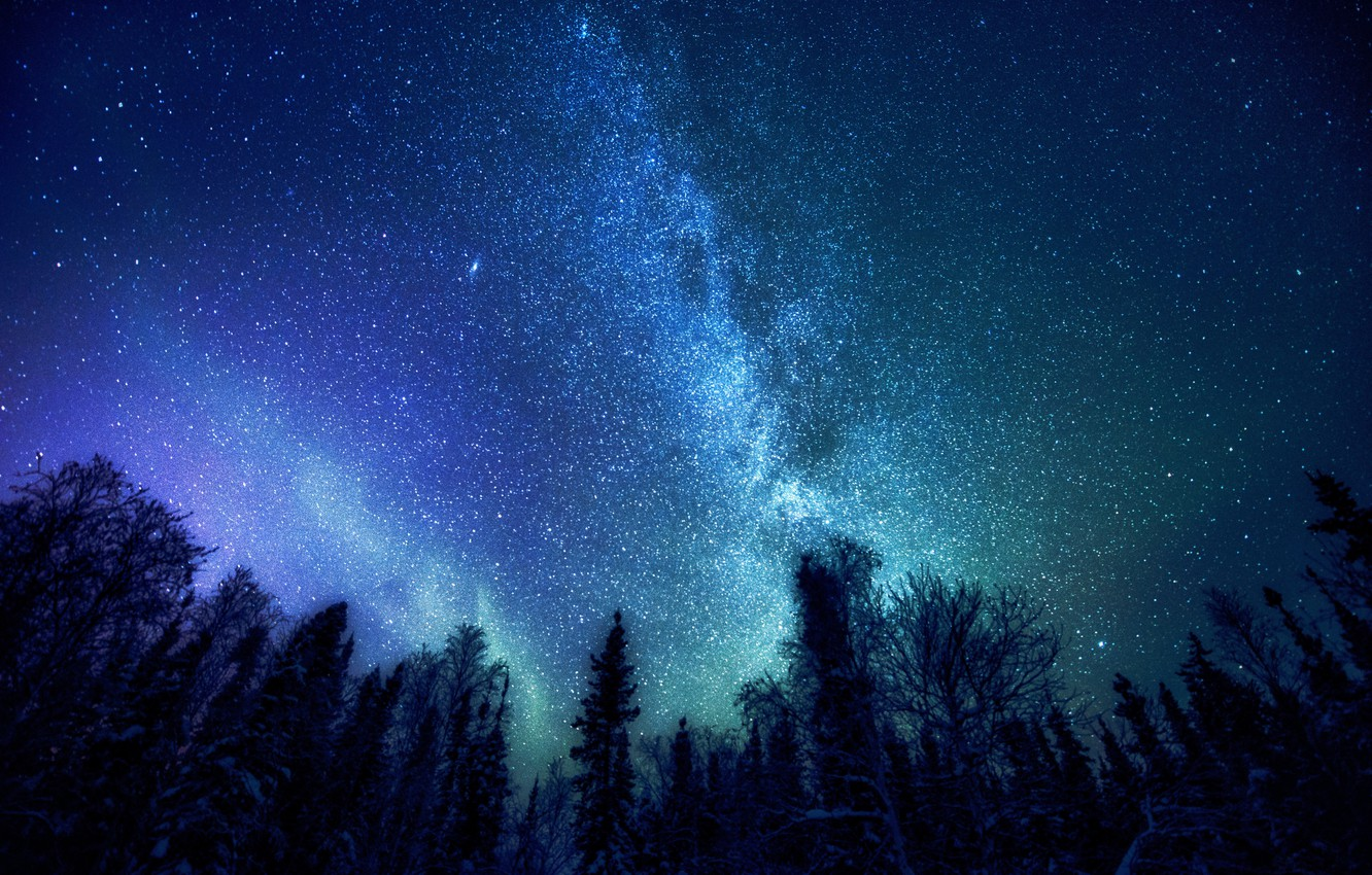 Photo wallpaper forest, space, stars, trees, The Milky Way, mystery