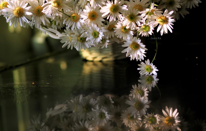 Photo wallpaper flowers, chamomile, otrozhenie
