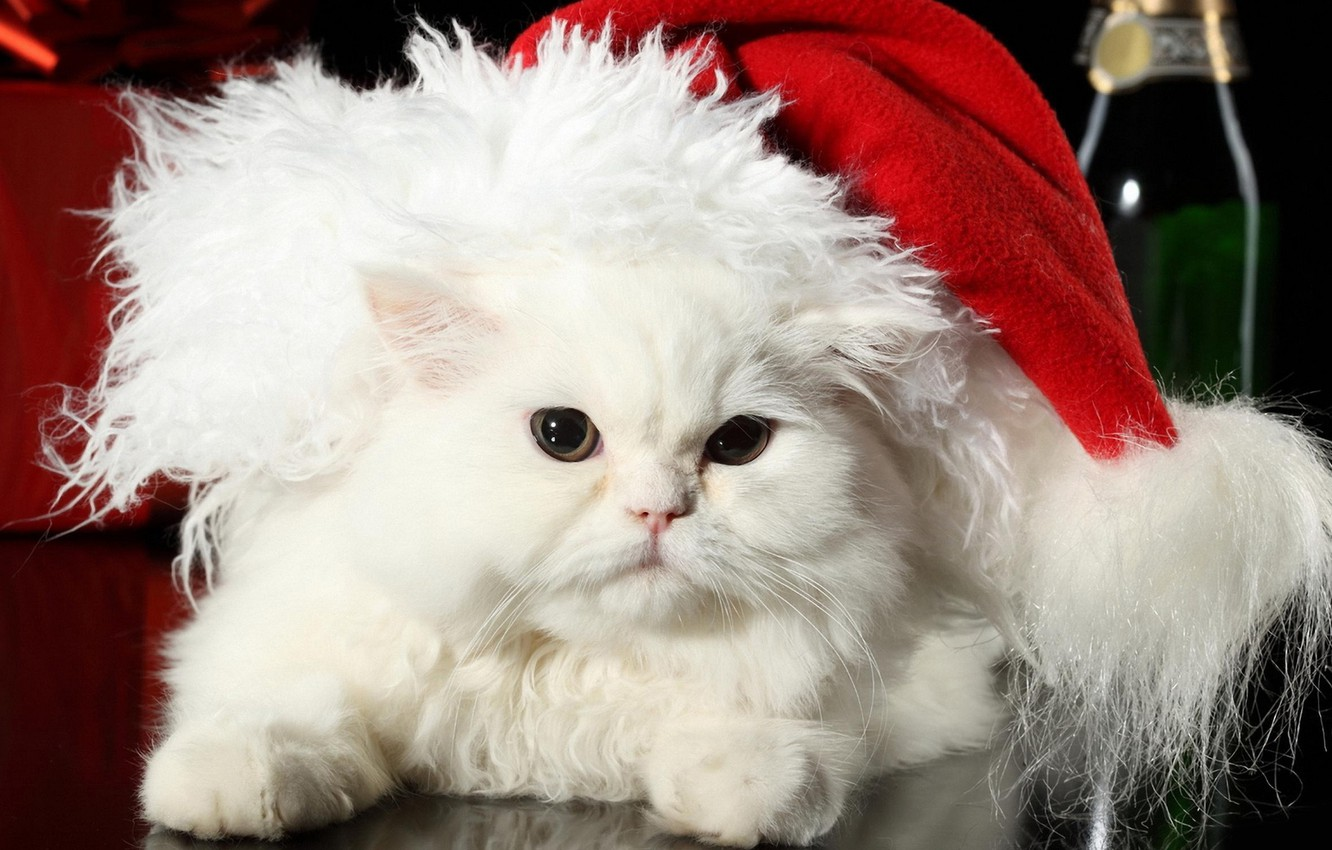 Photo wallpaper cat, white, cat, holiday, hat, new year, wool, fluffy, pers, fur, Santa Claus