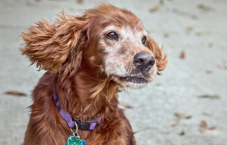 Photo wallpaper dog, pet, supermodel