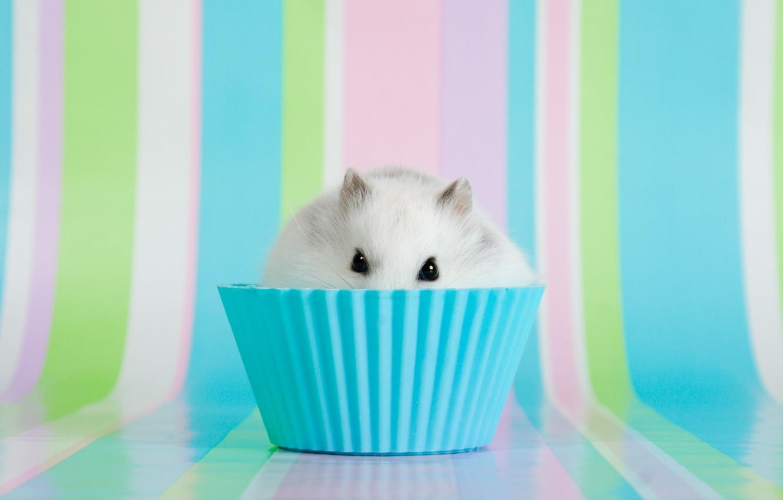 Photo wallpaper eyes, hamster, bowl, ears