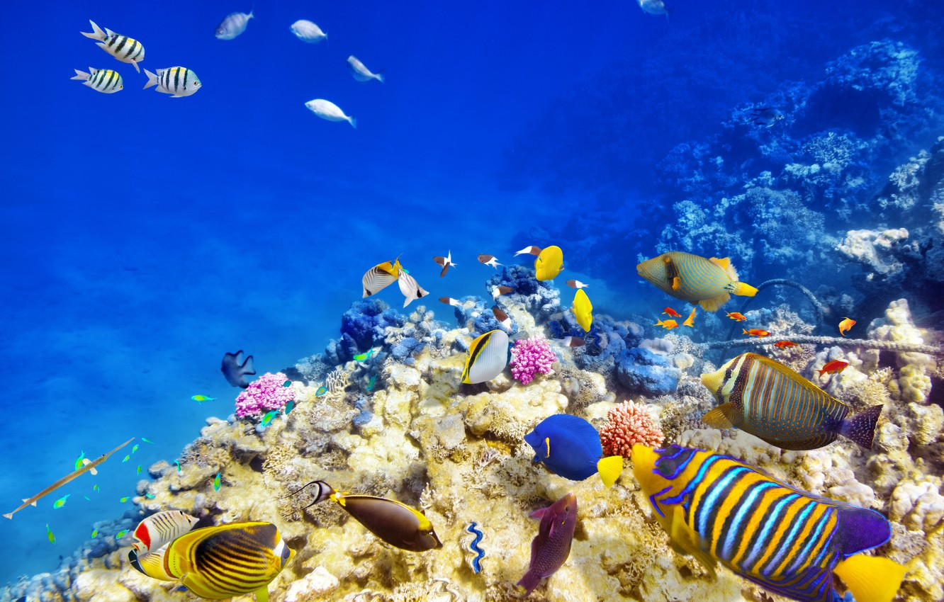 Photo wallpaper fish, the ocean, world, underwater world, underwater, ocean, fishes, tropical, reef, coral, coral reef