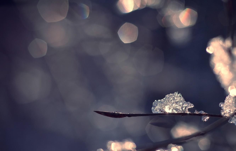 Photo wallpaper winter, macro, branches, glare, ice