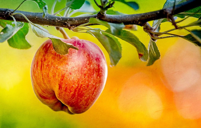Photo wallpaper nature, background, Apple