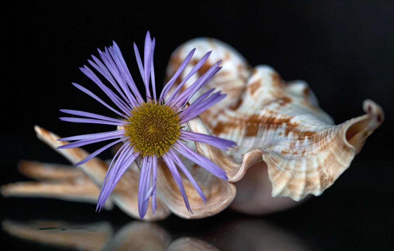 Photo wallpaper flower, background, shell