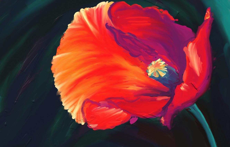 Photo wallpaper flower, red, Mac, art