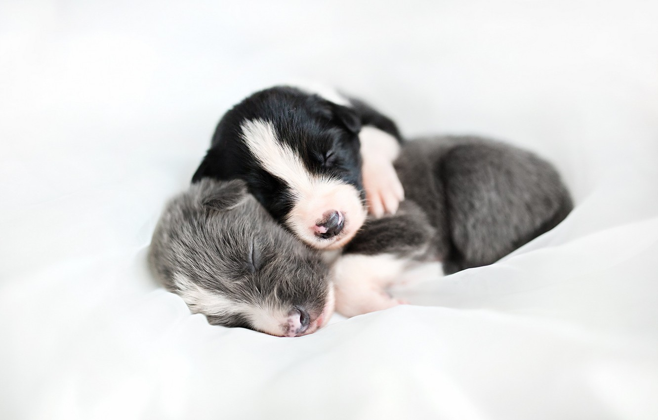 Photo wallpaper dogs, comfort, puppies