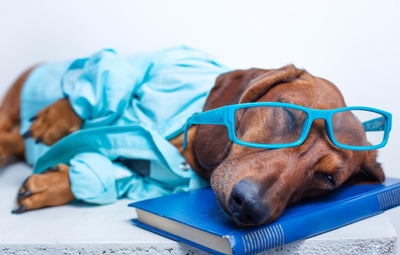 Photo wallpaper humor, glasses, sleeping, lies, book, Dachshund, shirt, resting