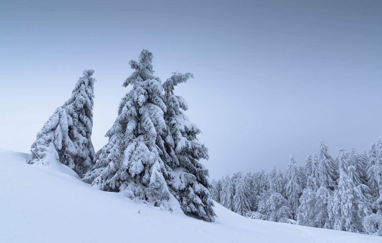 Photo wallpaper winter, snow, trees, landscape