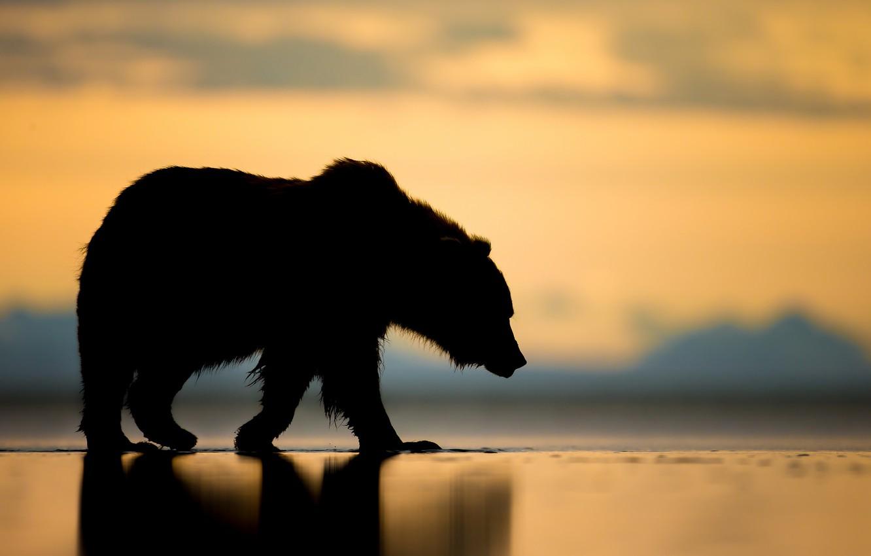 Photo wallpaper sunset, bear, Alaska, silhouette, the Bruins