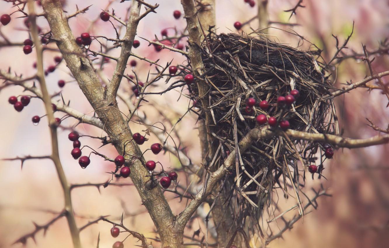 Photo wallpaper berries, tree, socket