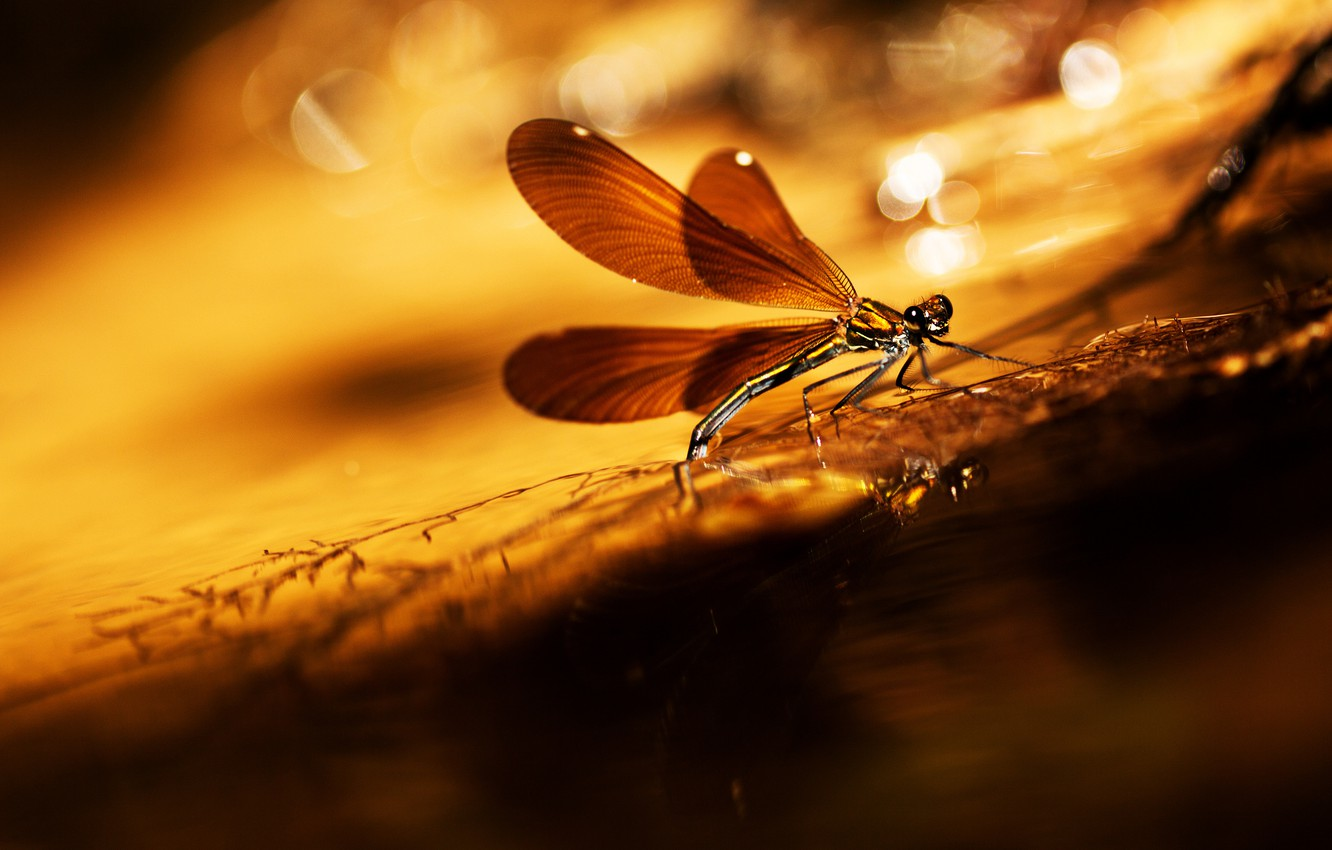 Photo wallpaper glare, background, dragonfly, a blade of grass