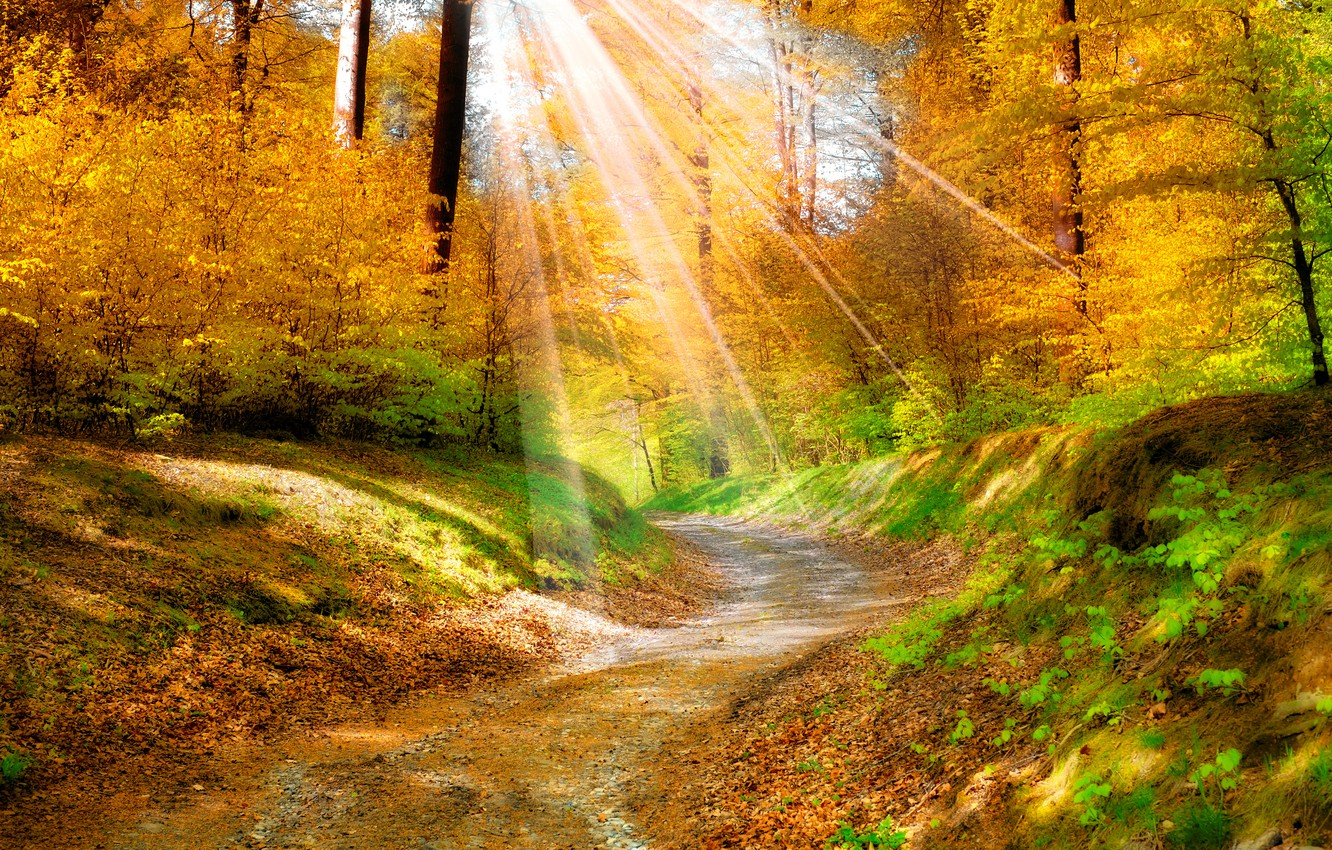 Photo wallpaper leaves, trees, landscape, nature, track, the sun's rays, Golden autumn, yellow. forest