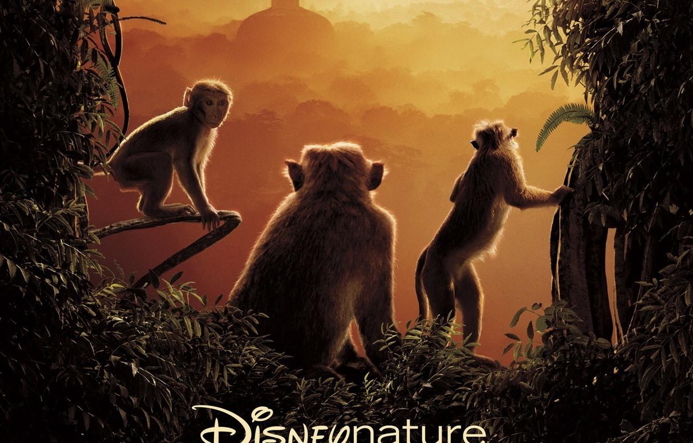 Wallpaper Monkey Forest Sky Jungle Tree Building Vegetation Vine Disney Nature Monkey Kingdom Images For Desktop Section Filmy Download