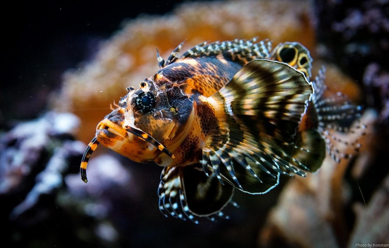 Photo wallpaper aquarium, fish, underwater world, fins, under water