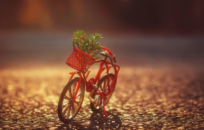 Photo wallpaper bike, basket, Bush, shadow, sunlight
