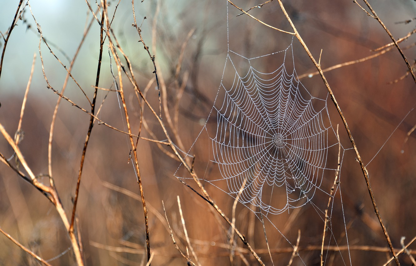 Photo wallpaper water, drops, branches, nature, plants, web, spider, after the rain, macro, dew, web, prairie, covered, …