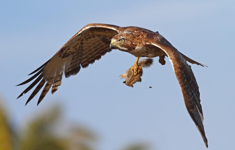 Photo wallpaper bird, hunting, eagle