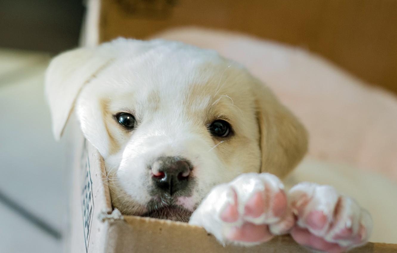 Photo wallpaper box, dog, puppy