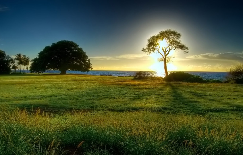 Photo wallpaper sea, the sun, tree, horizon, clearing