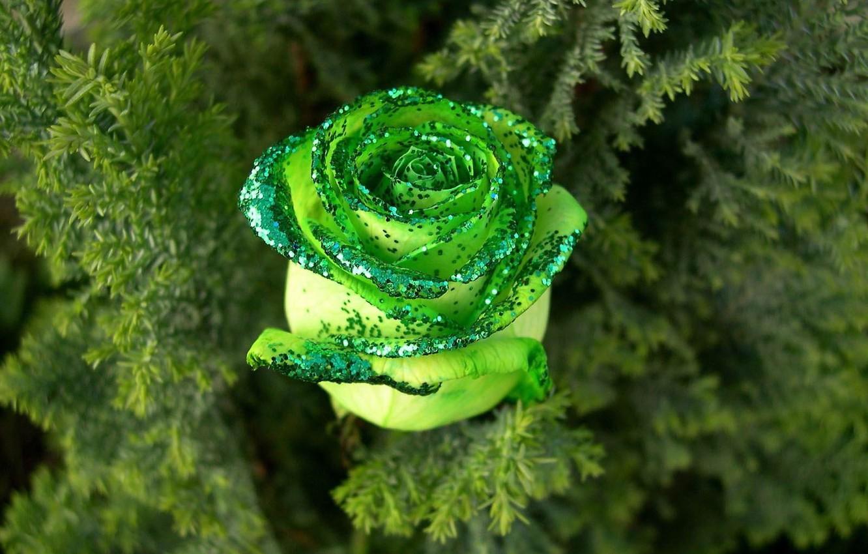 Photo wallpaper rose, Greens, sequins