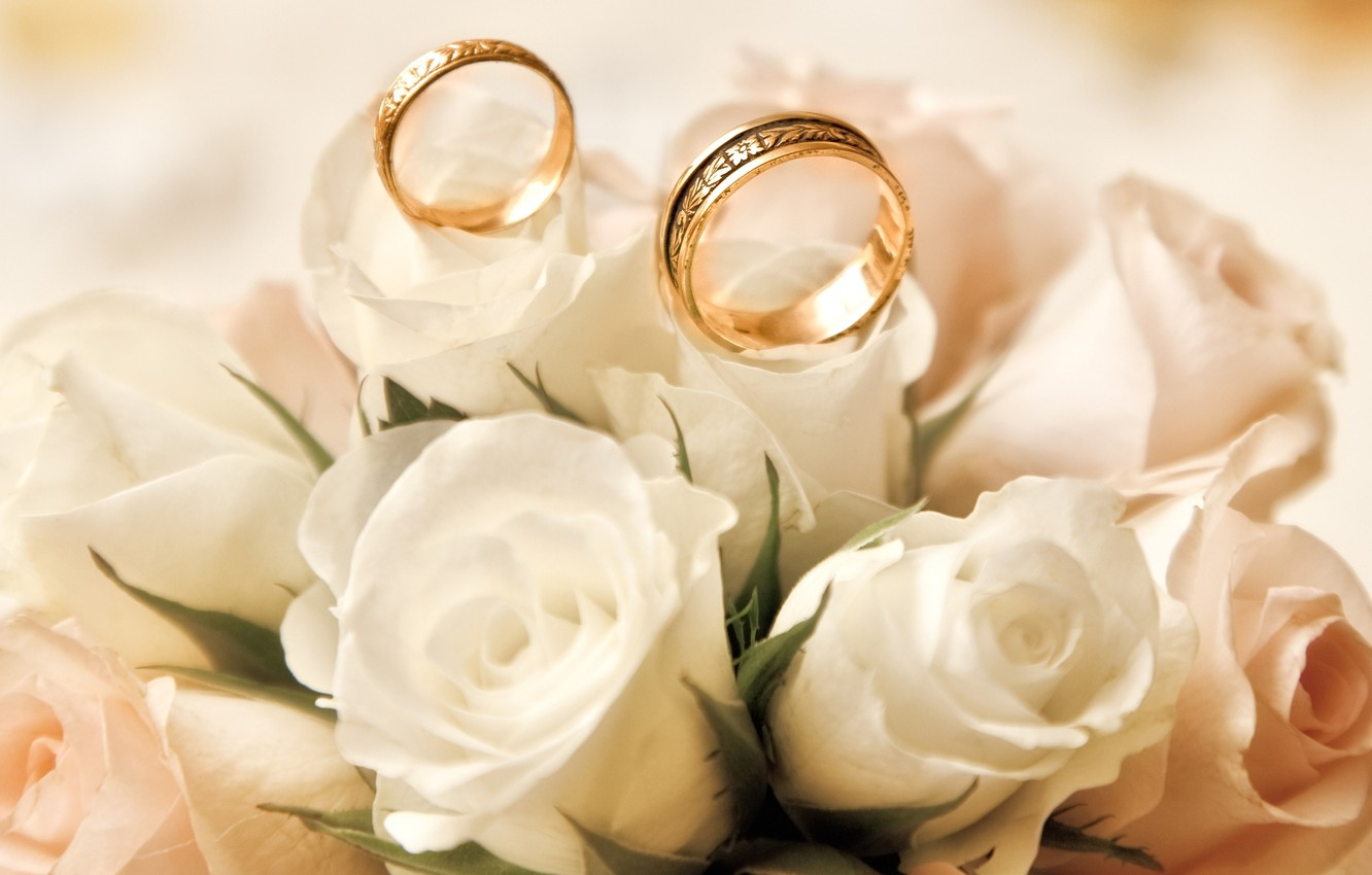 Photo wallpaper roses, white, buds, engagement rings
