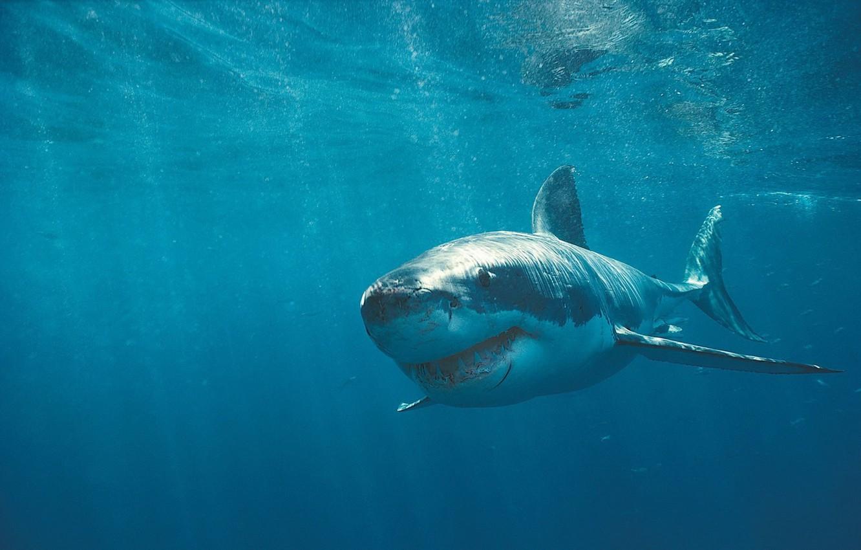 Photo wallpaper Shark, Teeth, Scars