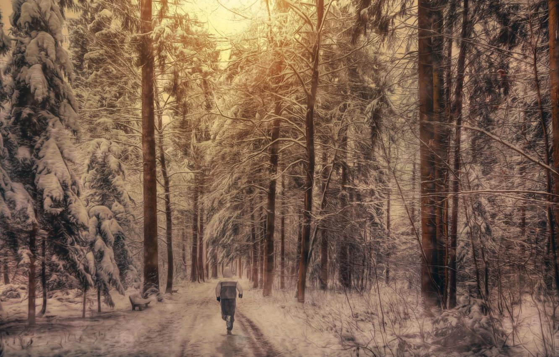 Photo wallpaper forest, snow, treatment, athlete, run, Winter running