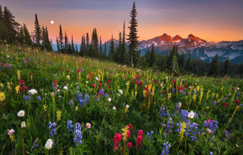Photo wallpaper moonrise, field, flowers, mountain